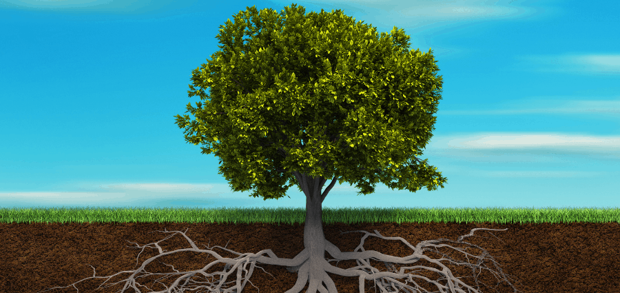 How to avoid tree roots growing into your pipes